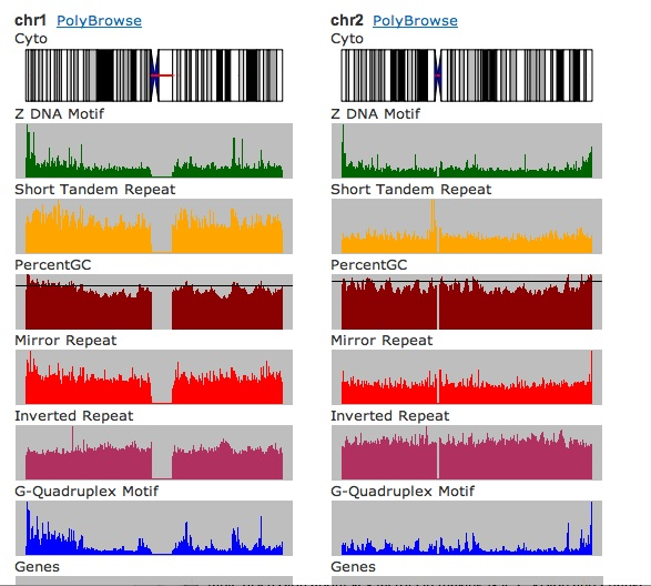 a screenshot of distribution of non-B DNA motifs and genomic features